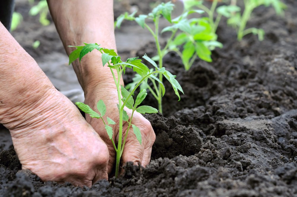 Photo of person planting