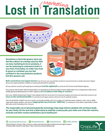 Lost in Marketing Translation Image