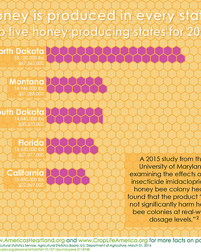 Honey is Produced Image