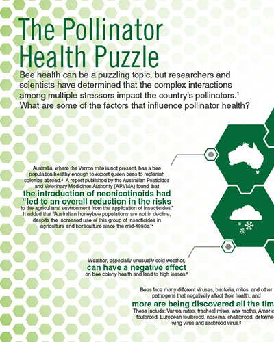 The Pollinator Health Puzzle Image