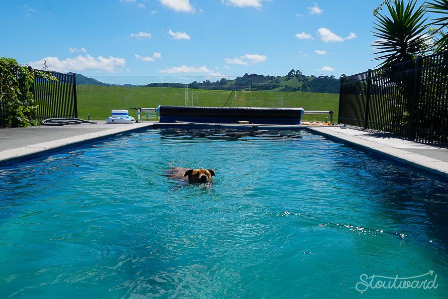 Bailey taking her daily swim.