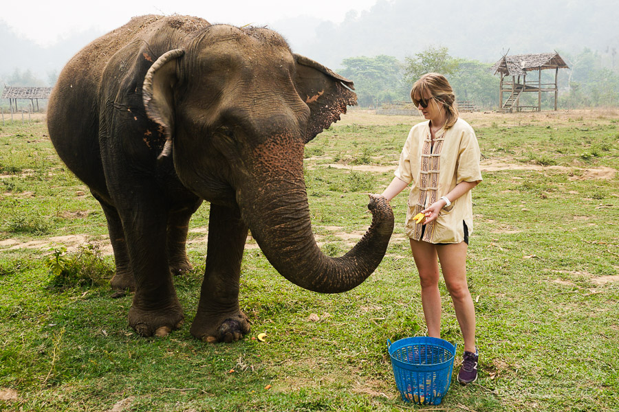 Feeding Happiness away from the other elephants.