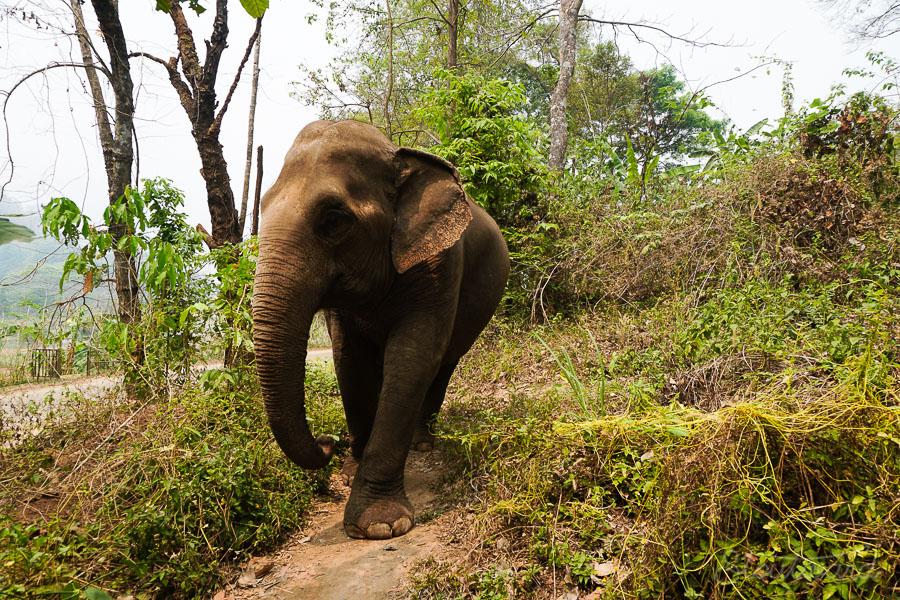 Elephants_Chiang Mai_Thailand_ENP_Elephant Nature Park_Rescue_Volunteer_Hike_Feed_Bath-8.jpg