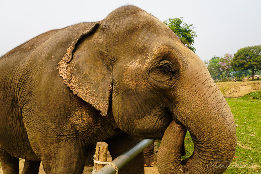 Elephants_Chiang Mai_Thailand_ENP_Elephant Nature Park_Rescue_Volunteer_Hike_Feed_Bath_Baby_Animals-1.jpg
