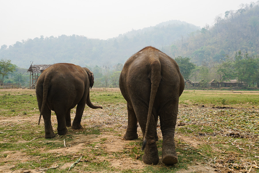 Elephants_Chiang Mai_Thailand_ENP_Elephant Nature Park_Rescue_Volunteer_Hike_Feed_Bath_Baby_Animals-6.jpg