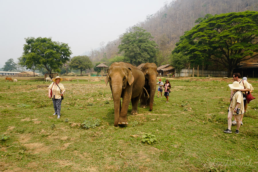Elephants_Chiang Mai_Thailand_ENP_Elephant Nature Park_Rescue_Volunteer_Hike_Feed_Bath_Baby_Animals-7.jpg
