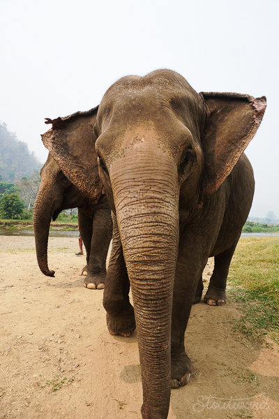 Elephants_Chiang Mai_Thailand_ENP_Elephant Nature Park_Rescue_Volunteer_Hike_Feed_Bath_Baby_Animals-11.jpg