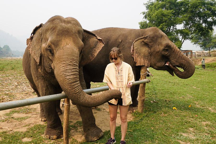 Elephants_Chiang Mai_Thailand_ENP_Elephant Nature Park_Rescue_Volunteer_Hike_Feed_Bath-2.jpg
