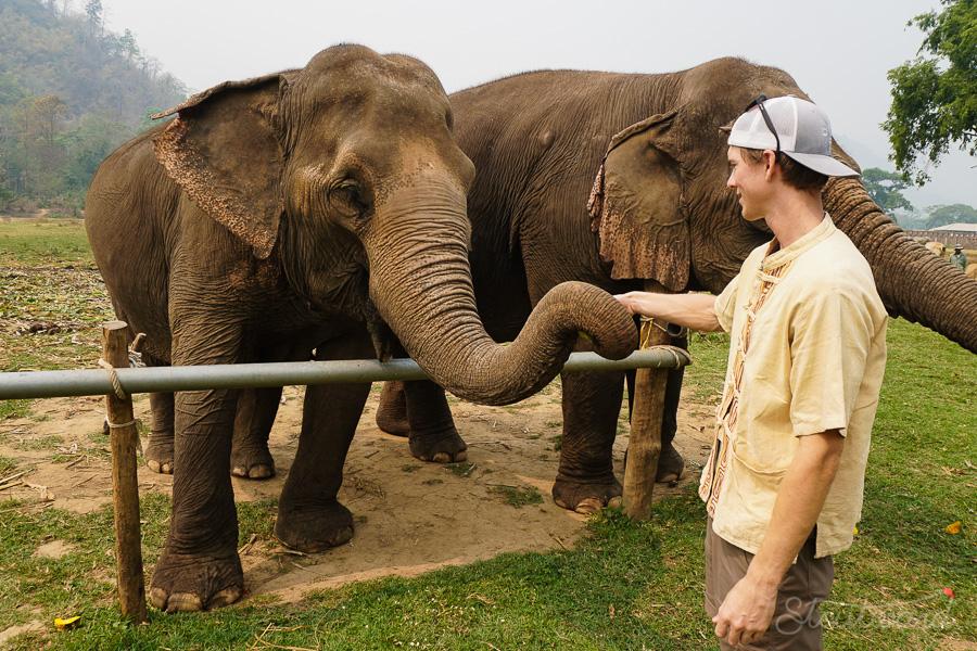 Elephants_Chiang Mai_Thailand_ENP_Elephant Nature Park_Rescue_Volunteer_Hike_Feed_Bath-3.jpg