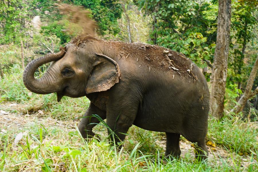 Elephants_Chiang Mai_Thailand_ENP_Elephant Nature Park_Rescue_Volunteer_Hike_Feed_Bath-9.jpg