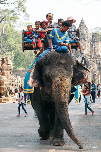 local cambodian family riding an elephant in front of the south gate of angkor thom in siem reap cambodia.