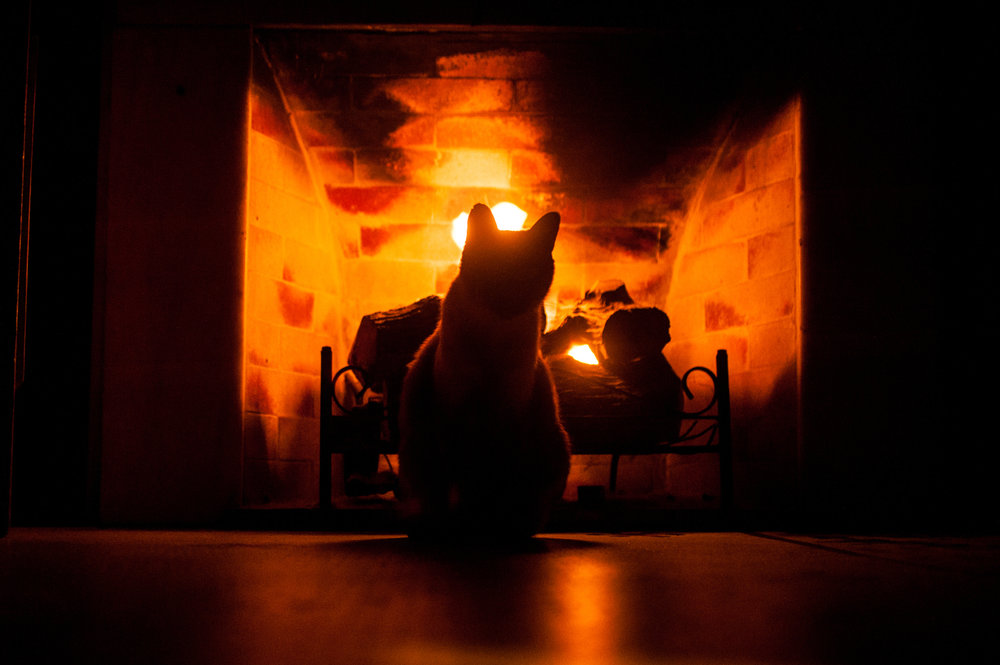 Cat-looking-at-fireplace-Sunwhispers-12282018-shutterstock_714752716.jpg