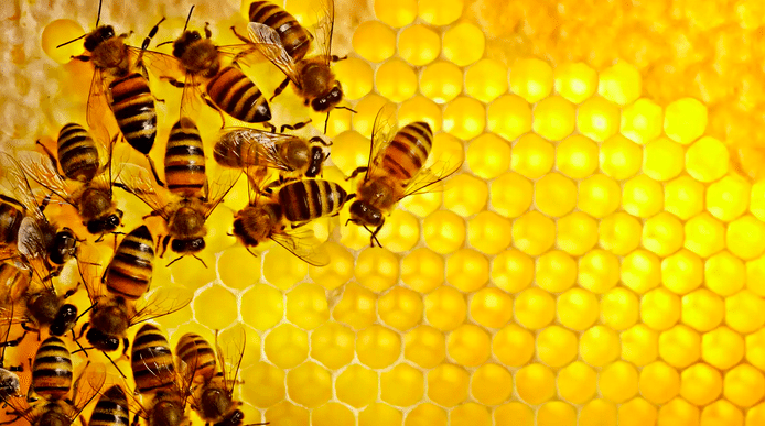 - A typical Bee colony consists of 30,000 to 60,000 bees.