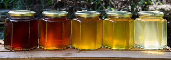 - The color and flavor of honeys differ depending on the nectar source (the blossoms) visited by the honey bees. In fact, there are more than 300 unique types of honey available in the United States, each originating from a different floral source. Honey color ranges from nearly colorless to dark brown, and its flavor varies from delectably mild to distinctively bold, depending on where the honey bees buzzed. As a general rule, light-colored honey is milder in taste and dark-colored honey is stronger.