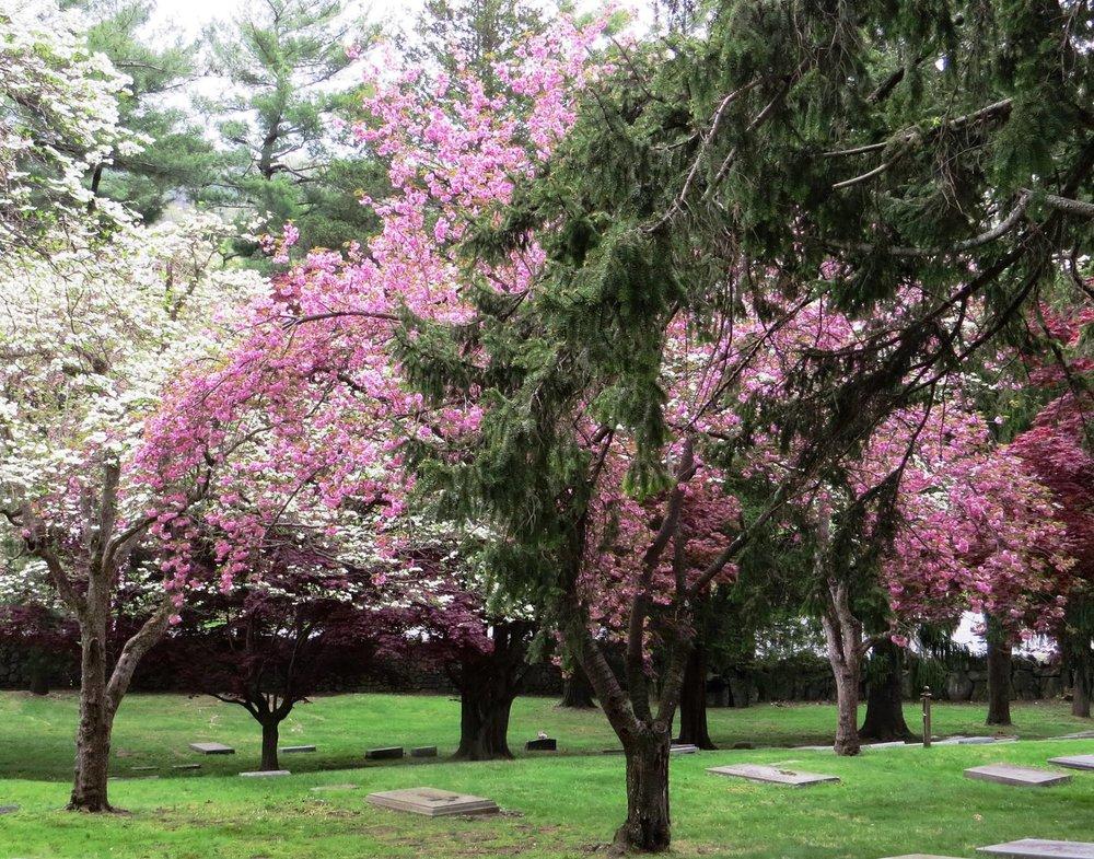 exterior graveyard in spring.jpg