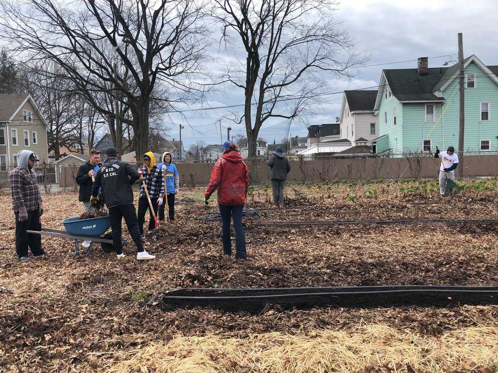 Zeta Beta Tau brothers raking leaves in a New Haven garden.