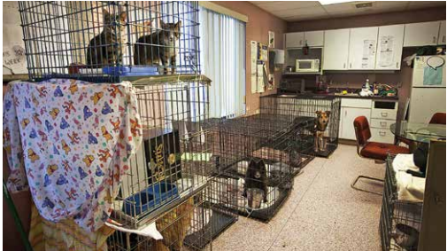 An example of poor structure of animal cages in an animal shelter sent by Connecticut Humane Society.