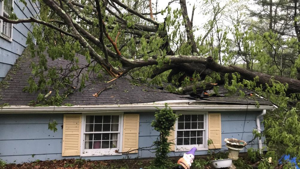 Tree Fallen on Garage Photo Cred: Roger Kepler