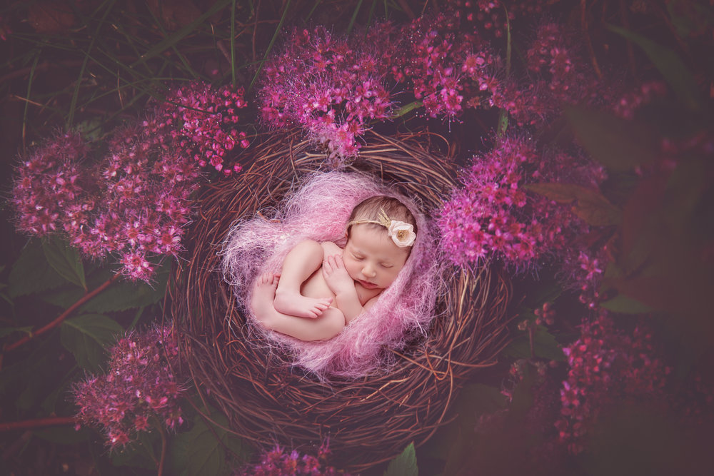 dreamland - newborn