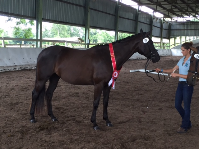 Aliea by Prince of Prussia out of Adriana by Advocate *Ps*E* was approved with a score of 55 and received the Reserve Champion Mare of the inspection.
