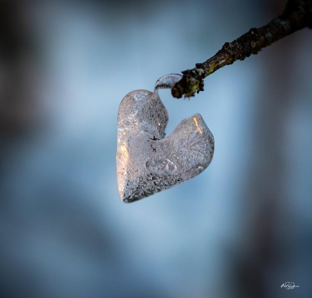 hjerte i skogen