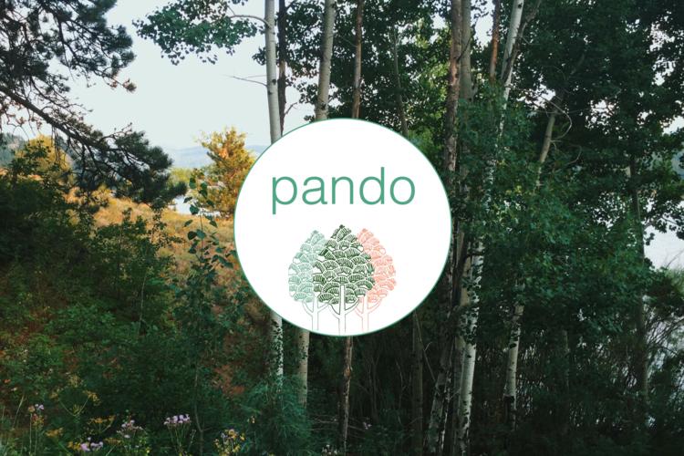 pando.png