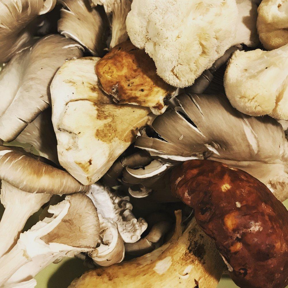 warepmin • earthy things (mushrooms)