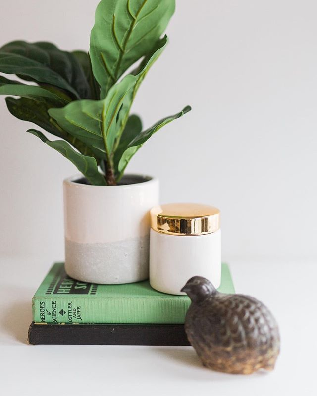Loving these little fig plants! They speak to my minimalist bohemian side . . . . . #fig #silkfig #fakefig #plantenvy #minimalisthome #whitecottagefarm #farmhouseliving #birdstatue #green #vintagebook #wisconsin #madisonwi #modernhomedecor #bohemiandecor #scandinavian #scandinaviandecor