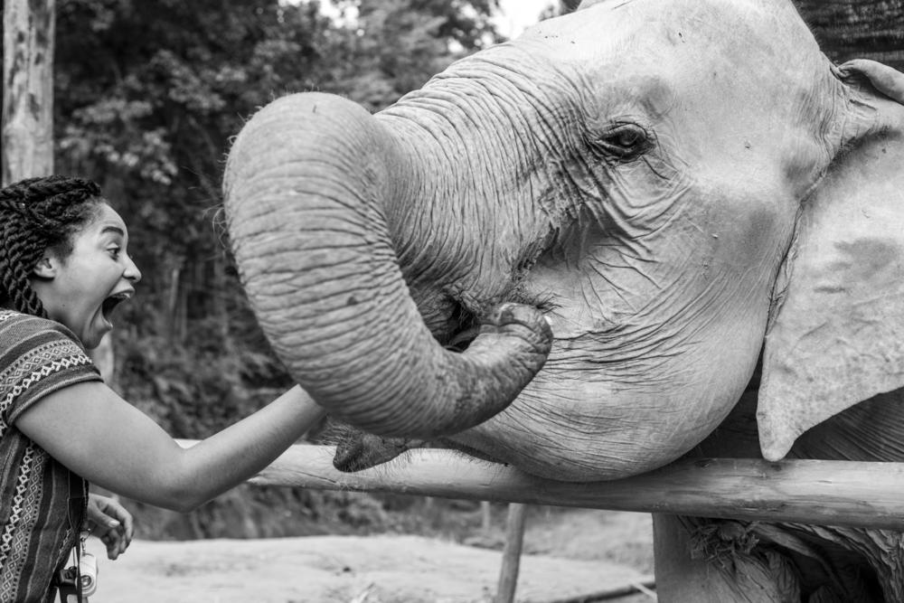 Elaisha Jade at Elephant Jungle Sanctuary in Chiang Mai