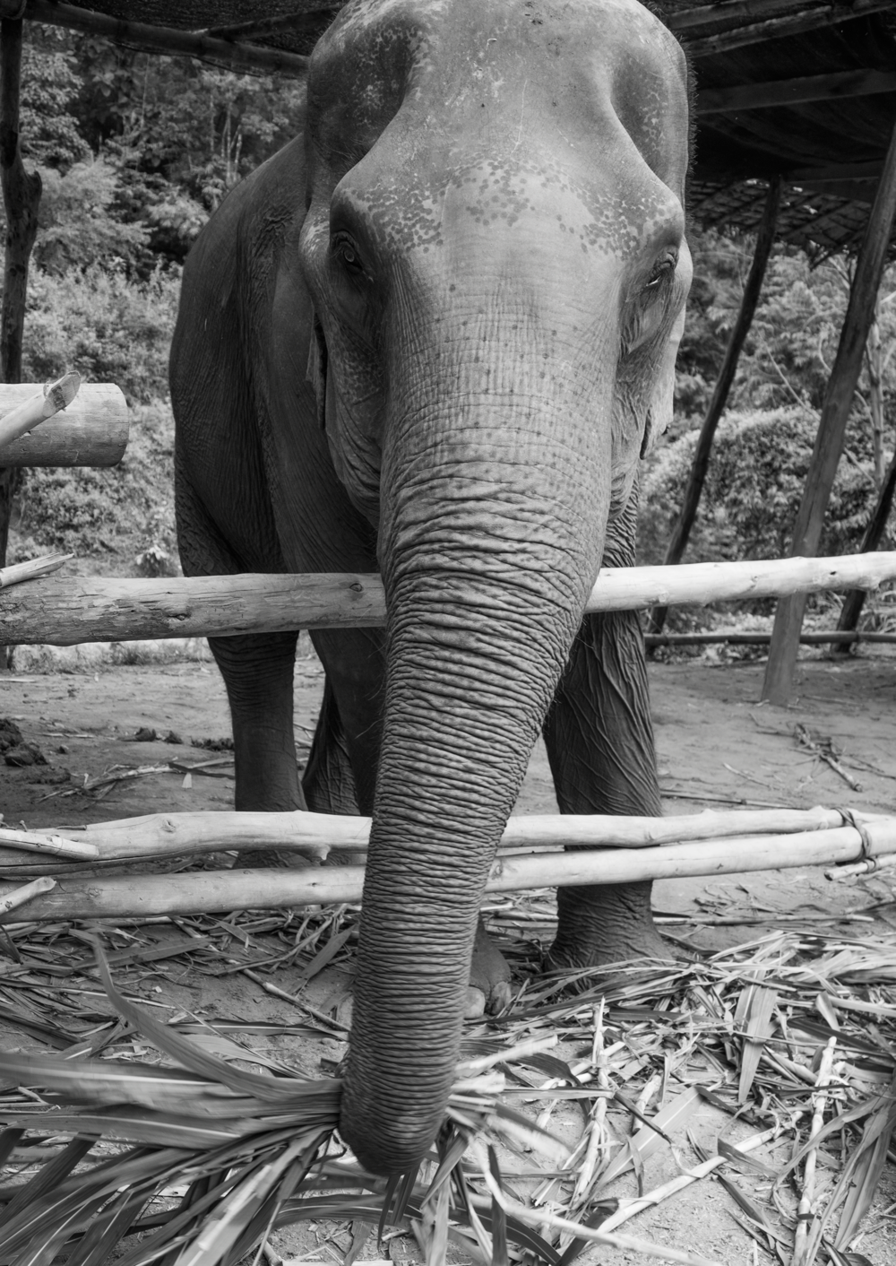 Elephant Jungle Sanctuary Thailand