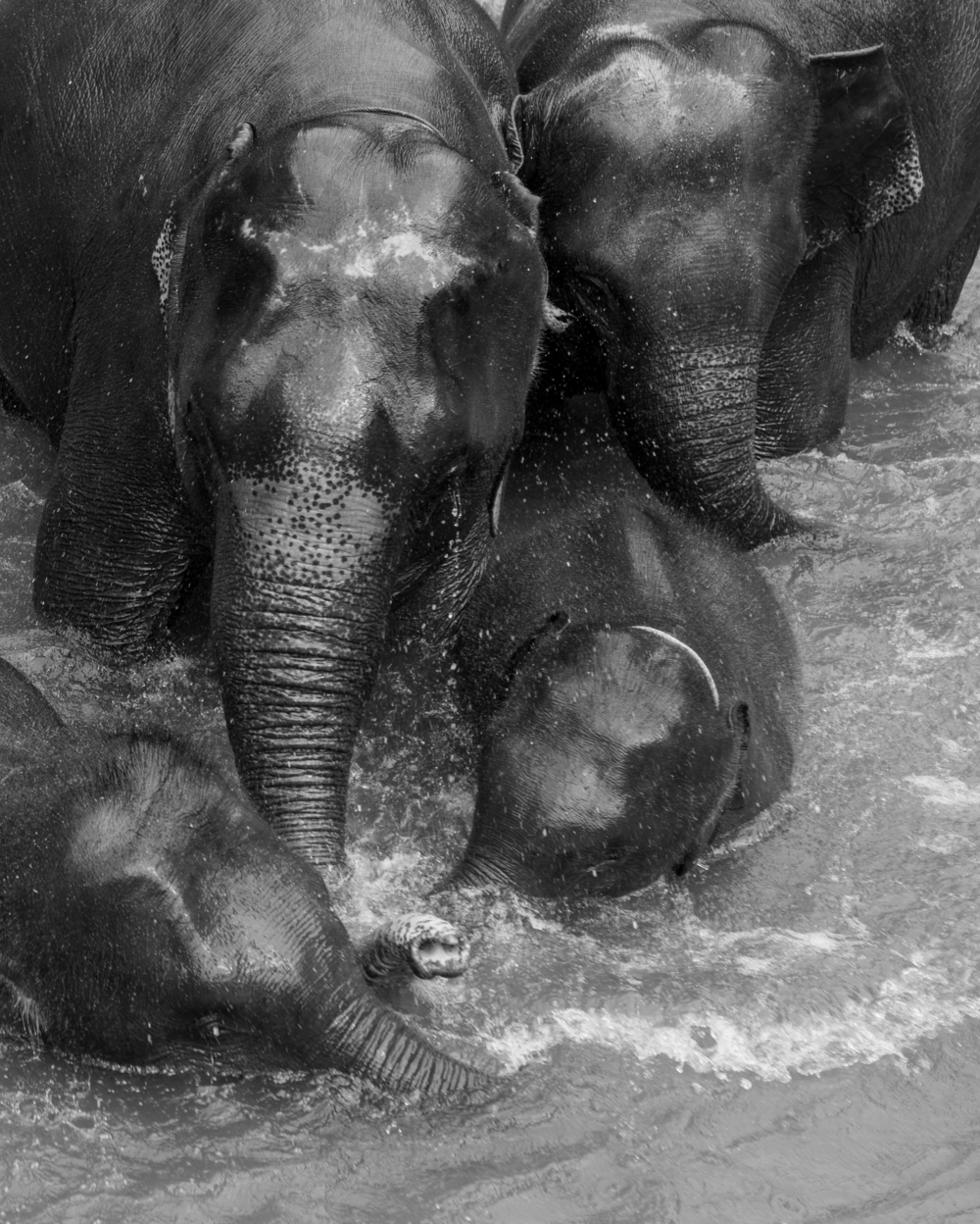 Elephants in the water.png