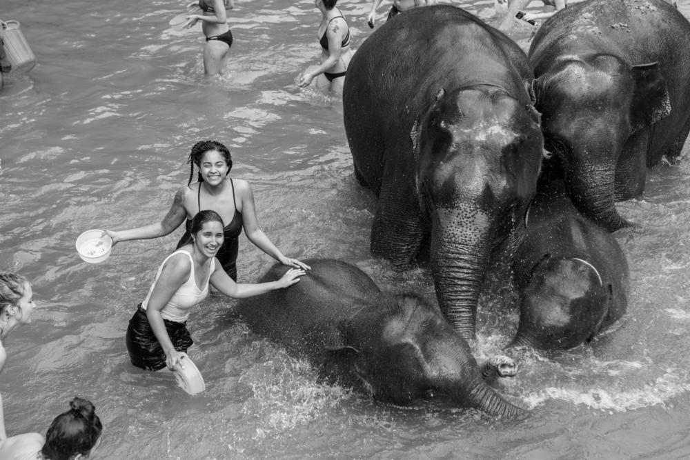Elephant jungle sanctuary chiang mai thailand