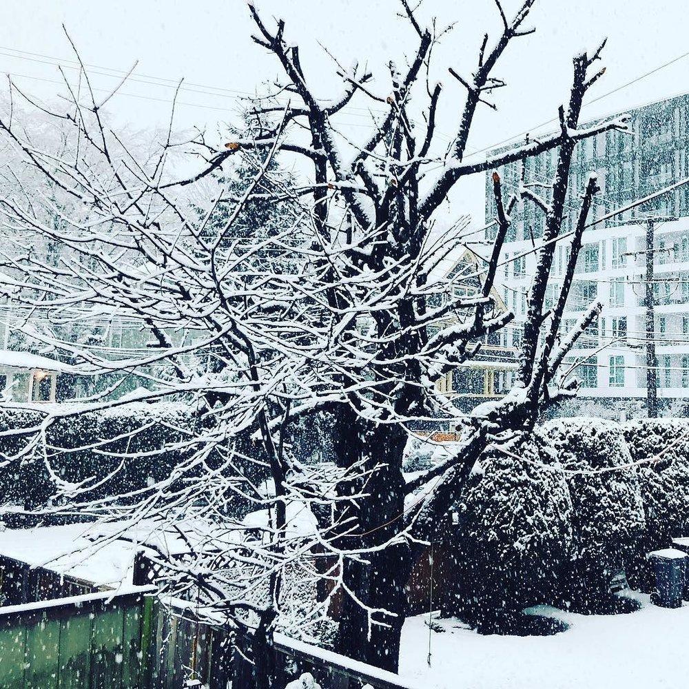 Snowing! ❄️