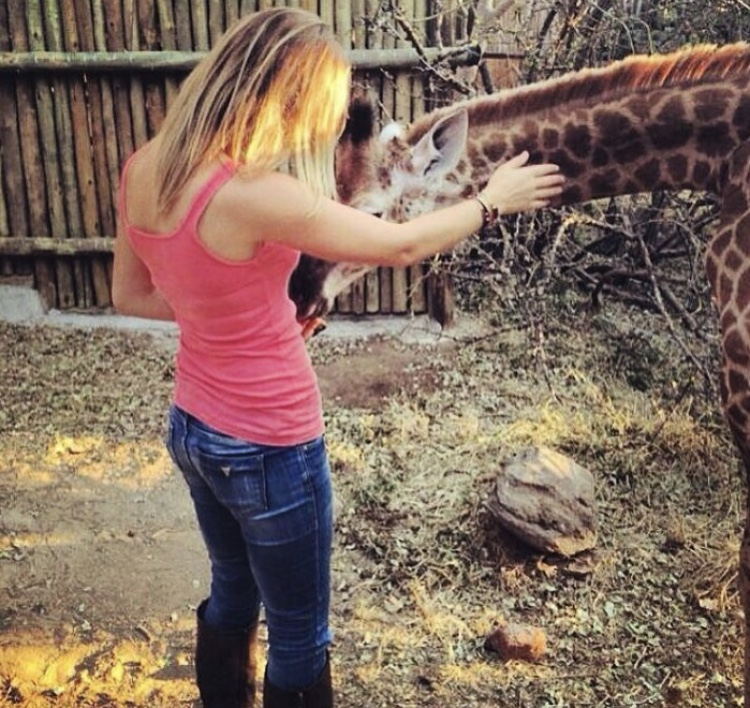 Exchanging love with an orphaned baby giraffe