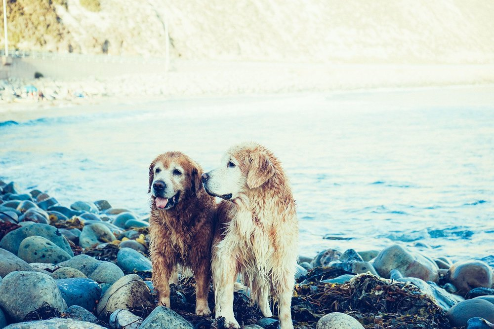 Perro-Amigos.jpg