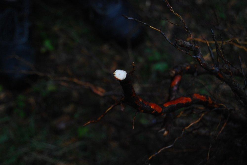 Taille des racines abîmées