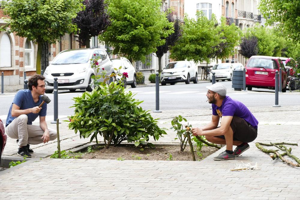 Atelier de végétalisation de l'avenue de l'Opale