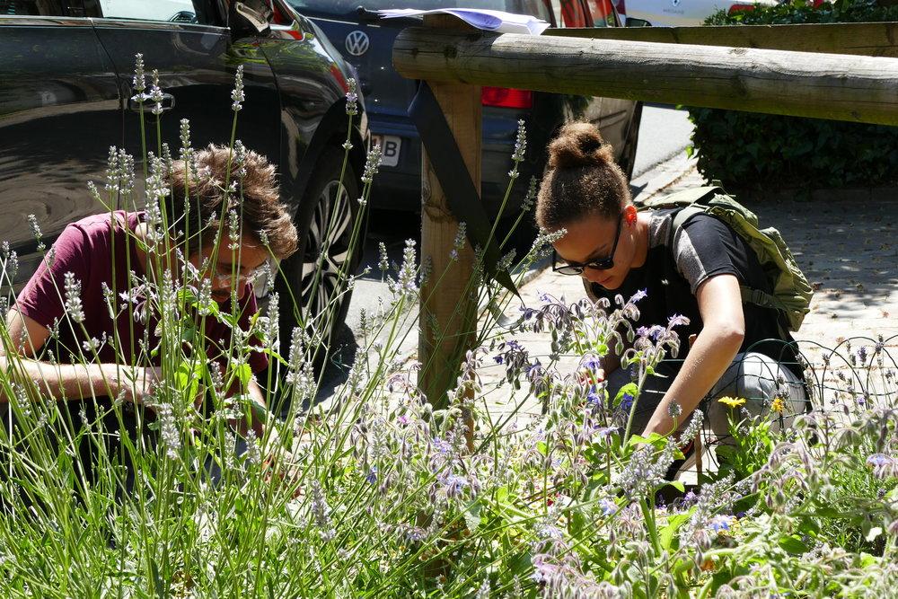 Atelier de sensibilisation à la biodiversité et relevé d'insectes