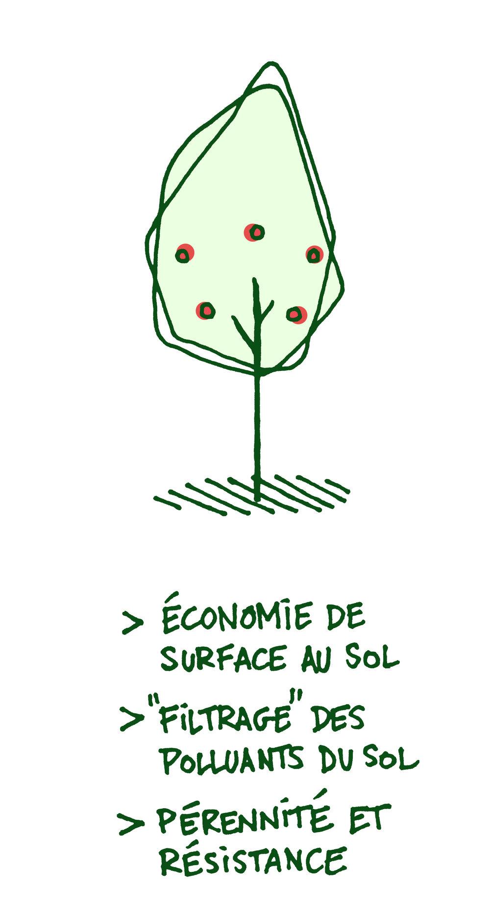 schéma avantage arbre fruitier.JPG