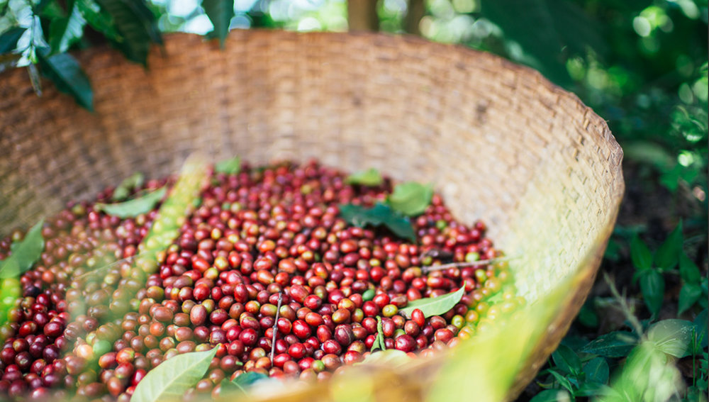Our Micro-Lot Coffee Series -