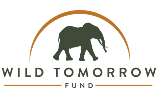Wild Tomorrow Fund do incredible work in wildlife and wild habitat conservation as well as supporting rural schools in South Africa.   10% of all company profits will be donated to supporting their work on the ground.