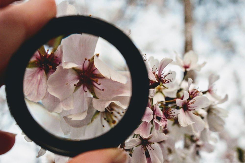 beautiful-bloom-blooming-979931.jpg