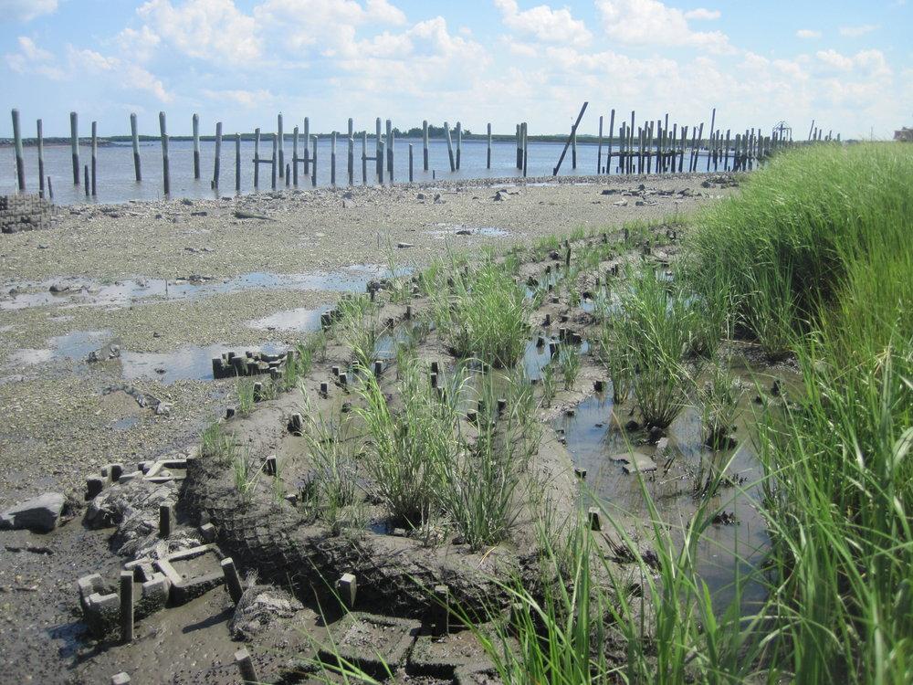 Traditional Living Shoreline