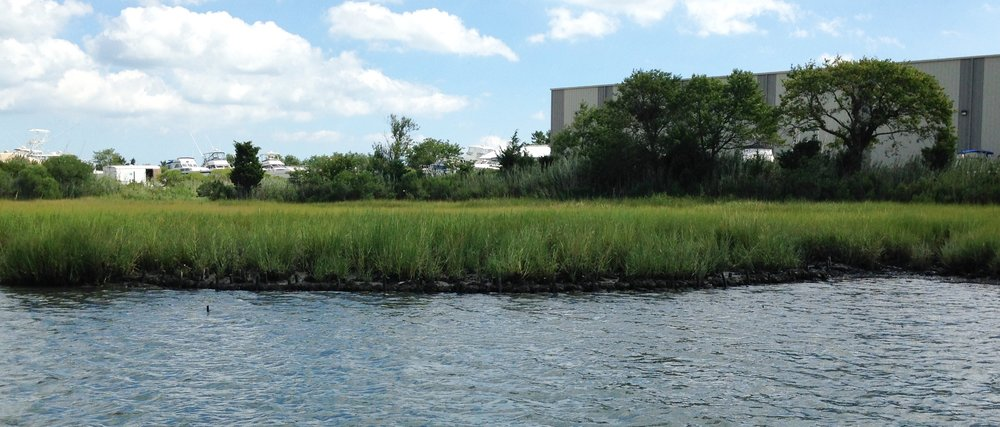 indian river inlet living shoreline with oysters from water 2016.jpg