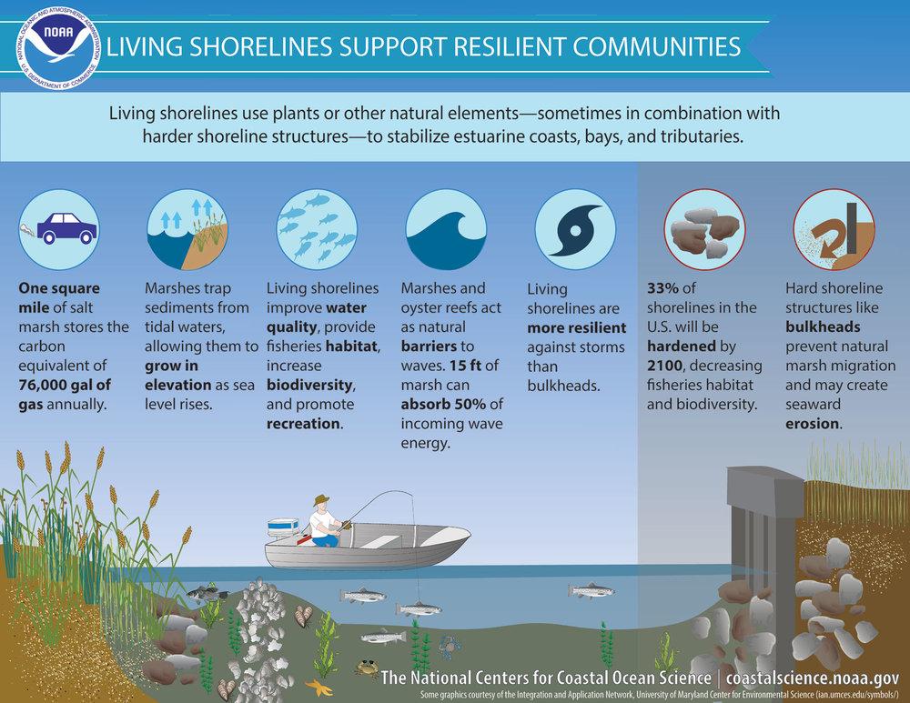 living-shorelines-b.jpg