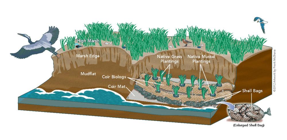 Living Shoreline Coir Log Illus for LISA.png