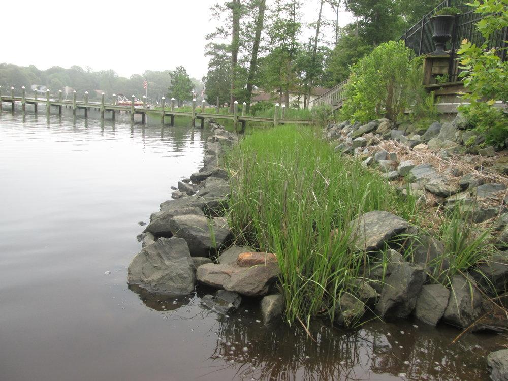 Hybrid Living Shoreline