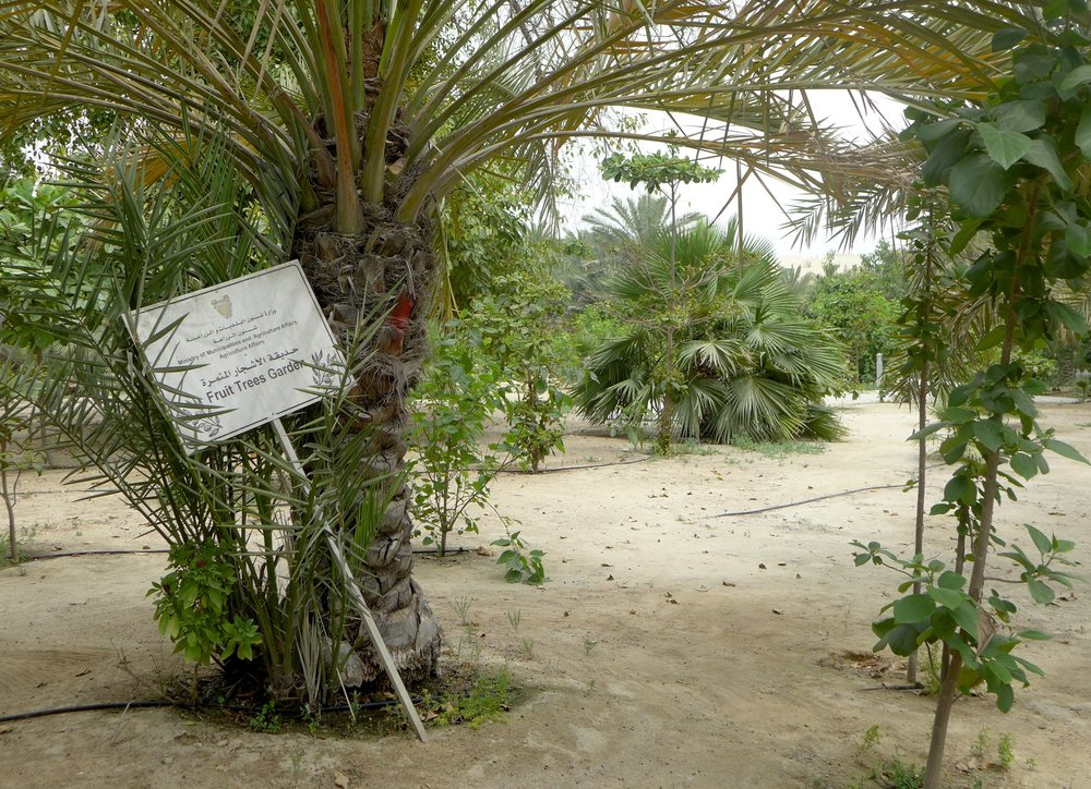 gardens-4.jpg