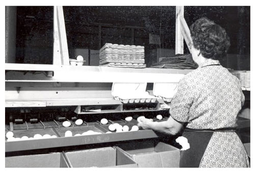 sorting-eggs.jpg