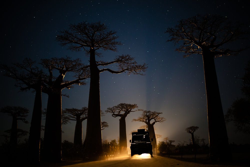 Allee des Baobabs at night